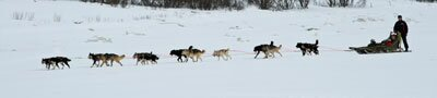 Dog sledding and ecotourism